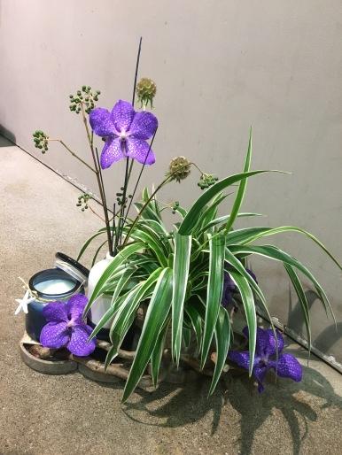 Arrangement plante et bougie