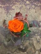 Arrangement rose lyophilisée