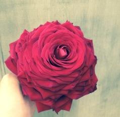 Rosemelia